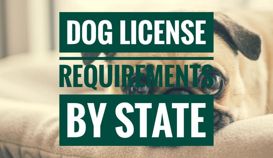 nj drivers license dog tag