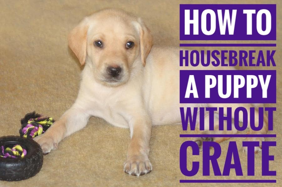 Housebreak a Puppy Without a Crate