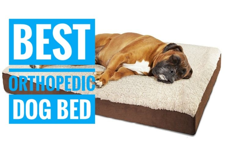 Best Orthopedic Dog Bed For Hip Dysplasia Arthritis And