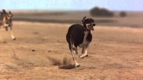 The Top 10 Fastest Dog Breeds in the world   Spoilt pups