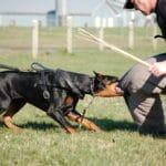 french ring sport, french ring, dog training, super dog sport,